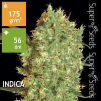 Marley`s Bud Feminised 500ks