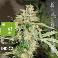 CBD Auto White Widow Feminised