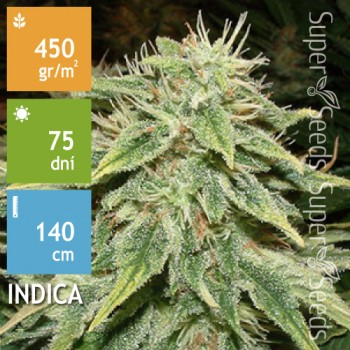 Auto Big Bud Feminised 1ks