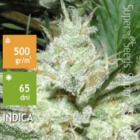 Auto Super White Russian Feminised 3ks