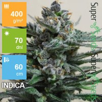 Auto Super Blueberry Feminised 1000ks