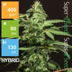 Auto Jack Herer Feminised 1ks